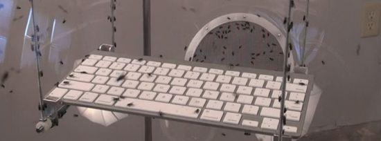 El teclado de Fly tweed de David Bowen