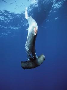 Aeltas tiburón 3