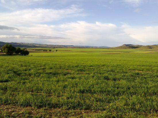 Agricultura Miguel