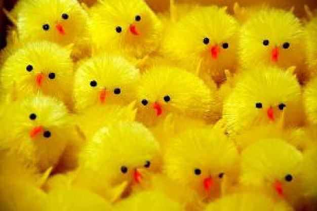 3-pollos-de-pascua_2975038