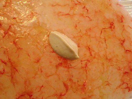"""No es un carpaccio. Son gambas rojas de Sicilia """"martilleadas"""" y aplastadas. El aderezo una mayonesa de huevas de pescado"""
