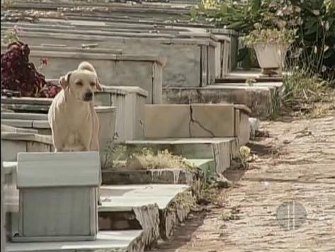 Perro en el cementerio (2)
