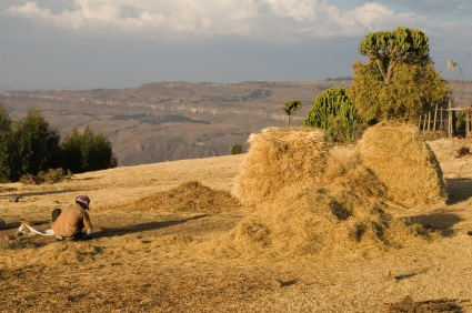 Teff-grain-in-ethiopia