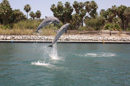 Delfines-baja-california-is