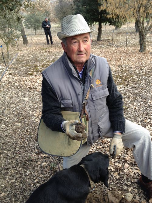José Luis Aragüe, veterano truficultor, recogiendo trufas con la ayuda de sus perros. Cuida como si fuera un jardin de 4 hectáreas micorrizadas en las que crecen encinas, robles y avellanos