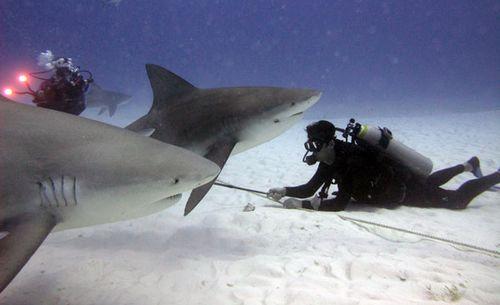 Tiburones 1