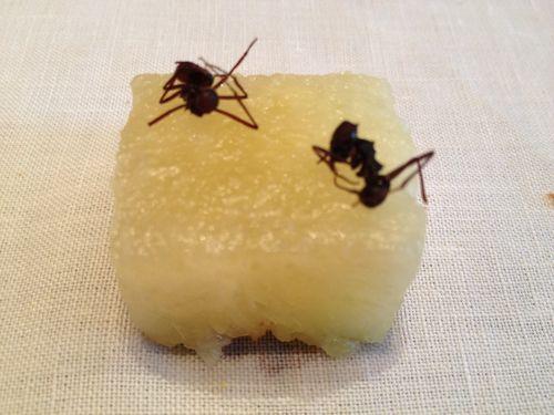 Piña al natural con hormigas cítricas del Amazonas, saben a tomillo limonero