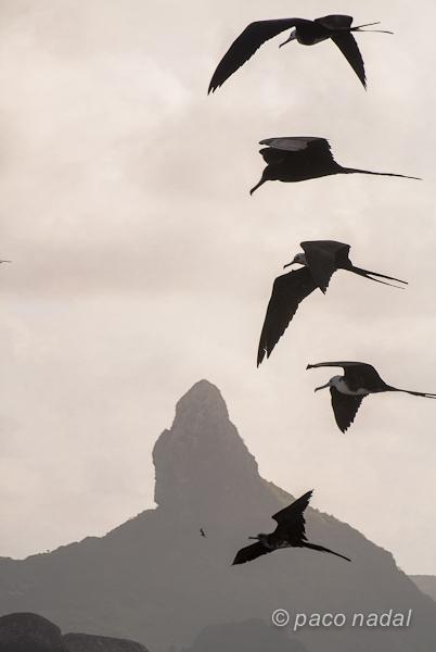 Pájaros y morro pico