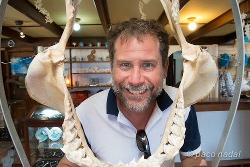 Museo tiburones