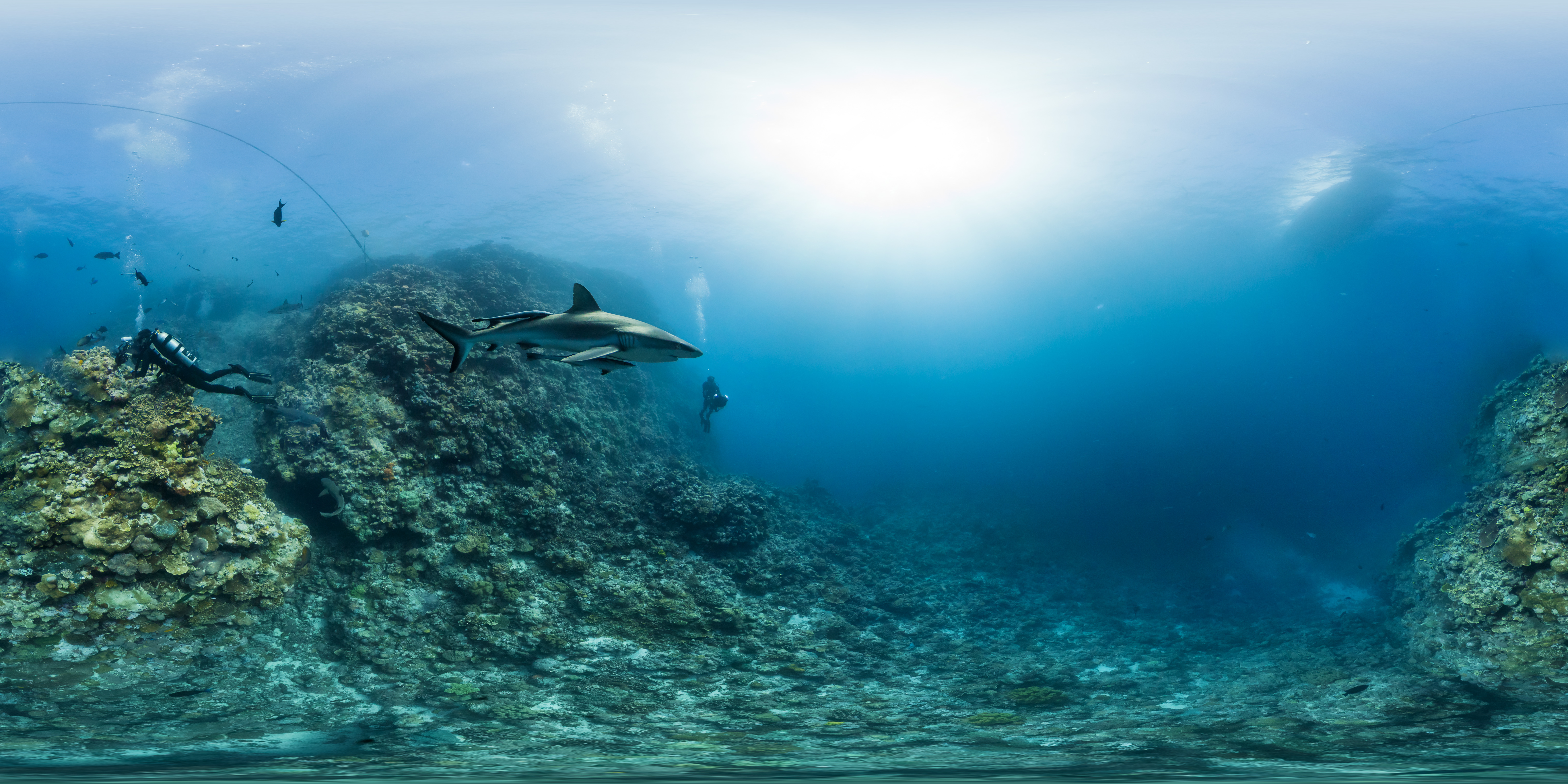Viaje alucinante al fondo del mar el viajero astuto - Fotos fondo del mar ...