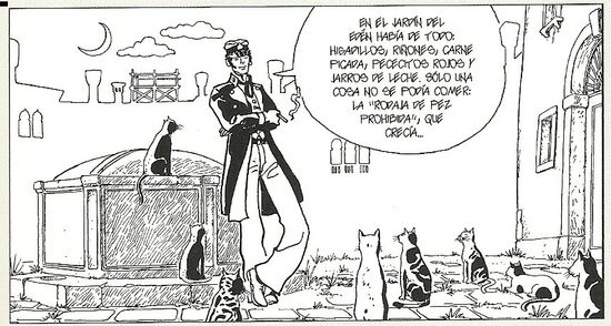 Corto gatos