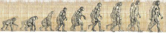 Darwin - Pasos Evolutivos