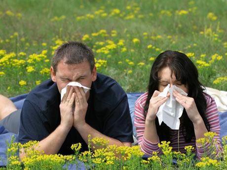 Alergias polen