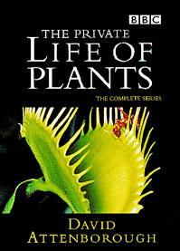 Vida privada de las plantas