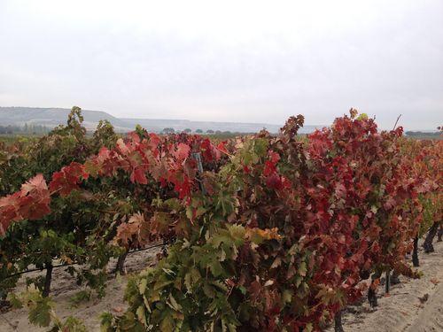 Colores del otoño en los viñedos
