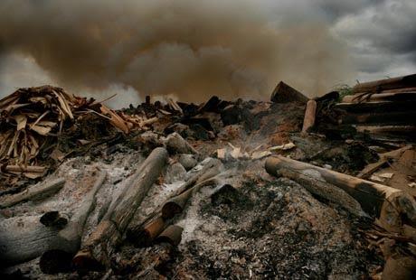 Amazonia quemada