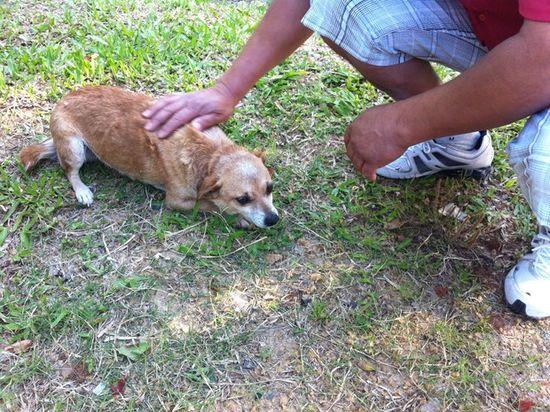 Holocausto- perro salvado