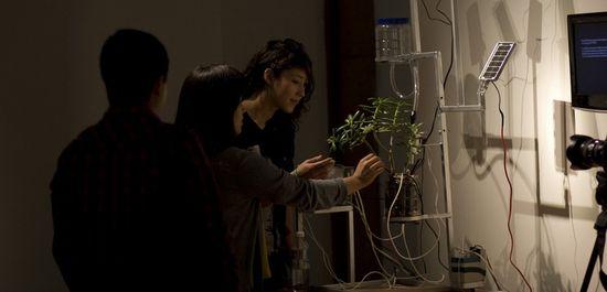 Pulsu(m) Plantae de Leslie García en la exhibición organizada por el FONCA