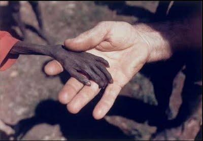 Compasión humana (3)