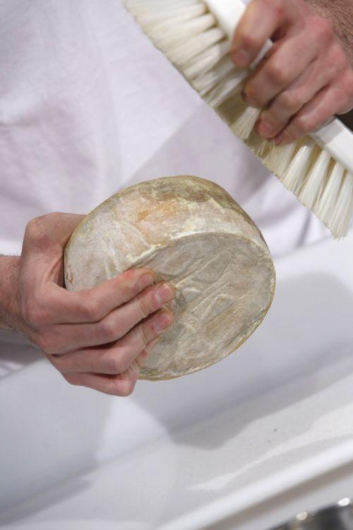 Cepillado de quesos