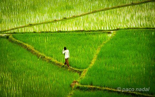 Chica en los arrozales