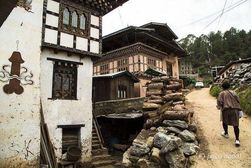 Falos Bután 3