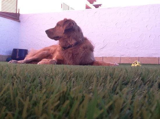De gato a perro en 100 días >> Emperrados >> Blogs EL PAÍS