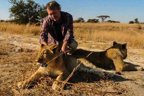 Paseando con leones 2