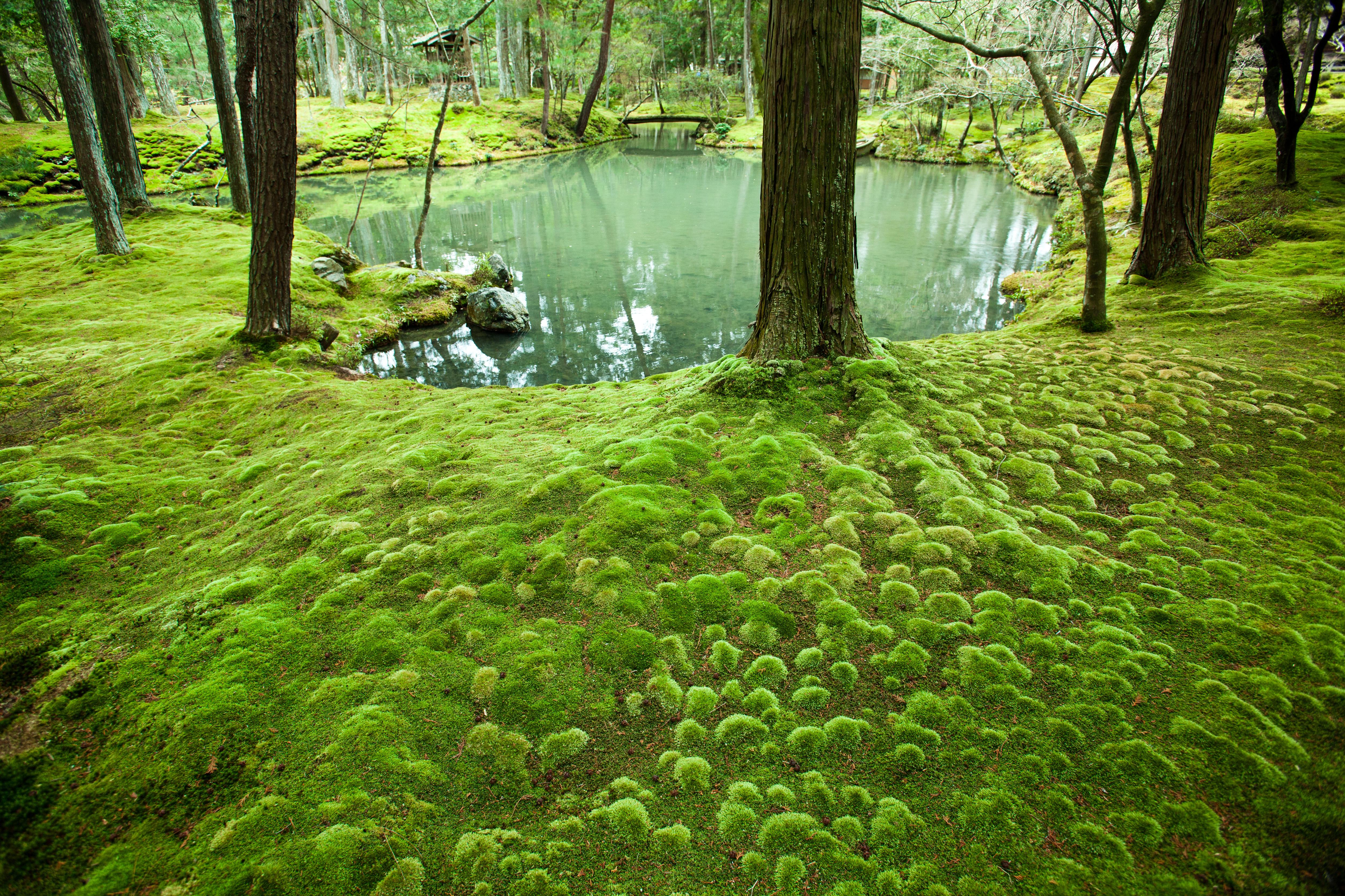 Templos rec nditos de jap n rumbo al este blogs el pa s for Jardin zen significado