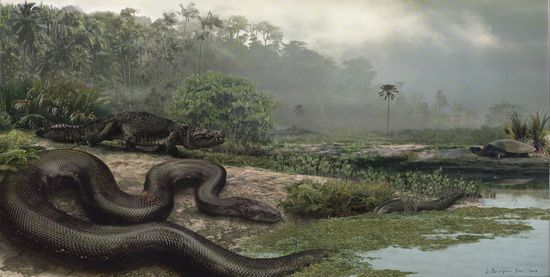 Giant-snake-illustrationJASONBOURQUEUNIVERSITYFLORIDA