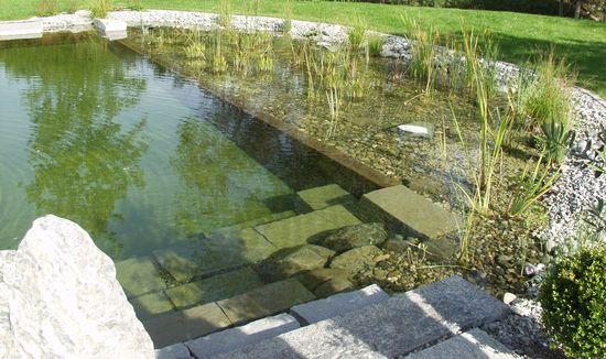 Una piscina naturalizada de Aragrup