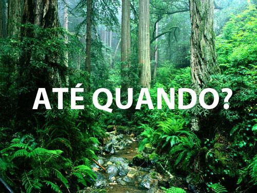 Amazonia (3)