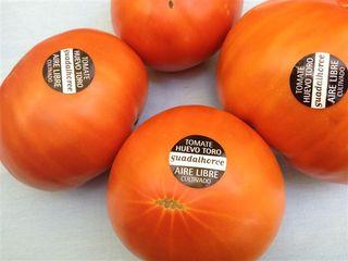 Tomates huevo toro, los más representativos de la comarca. Compactos, al corte parecen filetes con un sabor intenso a tomate