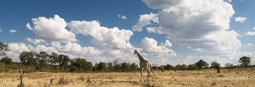 Cielos de África 9