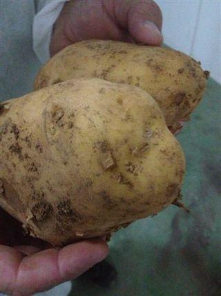 Patatas agrias de Cartagena (Murcia), uno de los secretos de San Nicasio