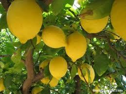 Limones de Murcia