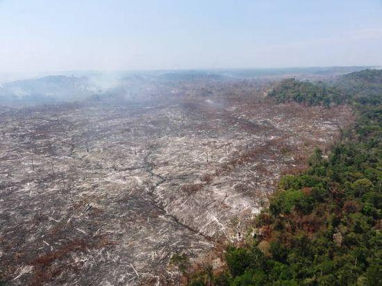 Amazonia (1)