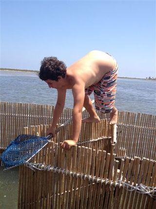 Jacinto Castejón, sobrino de los hermanos Albadalejo, jugando a equilibrista sobre las encañizadas con un salabre en las manos, dispuesto a pescar