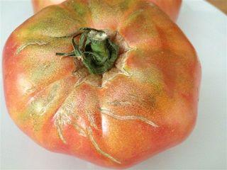 Tomate de la Huerta de Carabaña