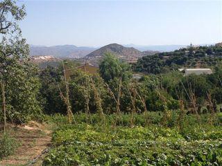 Plantaciones de tomates y árboles frutales. Al fondo perspectiva de las huertas del Guadalohorce, enclave de producción ecológica.