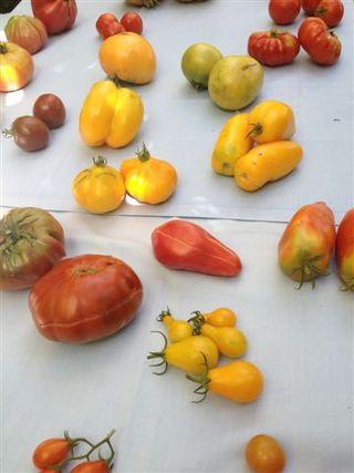 Mesa de cata con distintas variedades expuestas