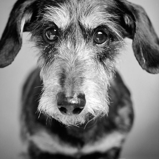 Perros que miran y perros que sueñan >> Emperrados >> Blogs EL PAÍS