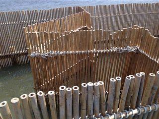 Perspectiva próxima de uno de los corrales de cañas de bambú que jalonan las encañizadas