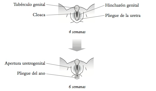 Por qué las aves no tienen pene? >> Apuntes científicos desde el MIT ...