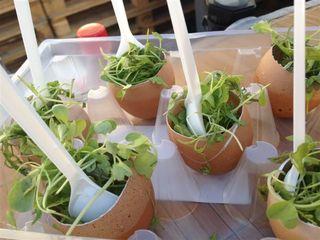 Huevos con guacamole y brotes vegetales