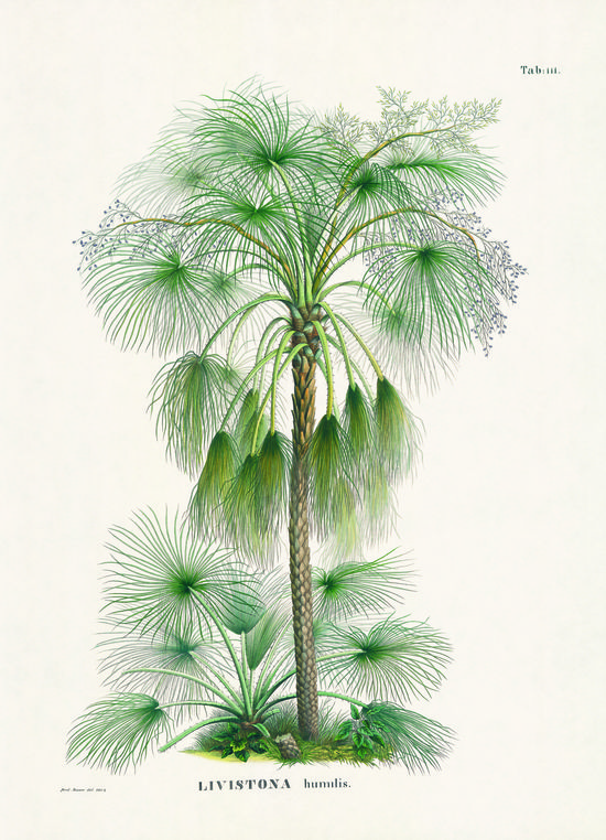Martius_book_of_palms_04