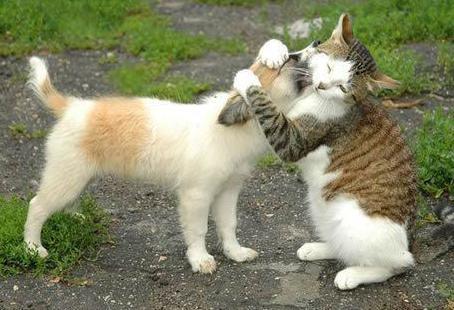 Perros y gatosjuntos (3)
