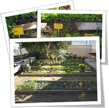 Ya sabían el origen de muchas verduras, tenemos un huerto escolar