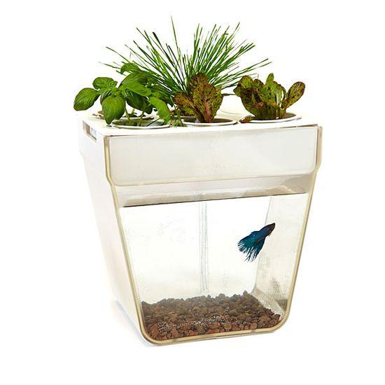 F40a_aquaponics_fish_garden