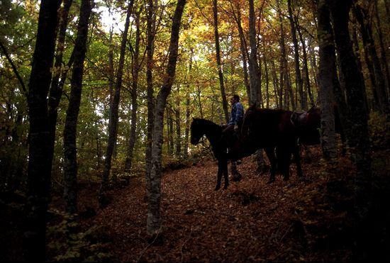 Rutas a caballo y turismo rural por el hayedo de Estalaya en el parque natural de Fuentes Carrionas, Palencia p retamar